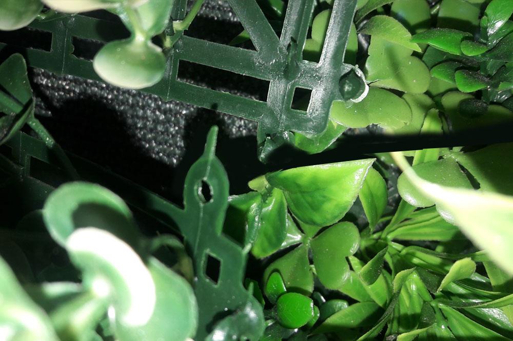 conseil de pose murs végétaux